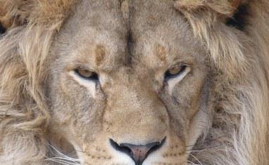 Зоопарк - Хищники  - фото 1