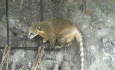 Зоопарк - Хищники  - фото 3