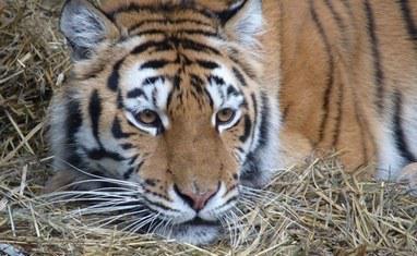 Зоопарк - Хищники  - фото 4