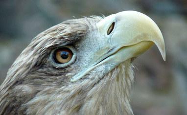 Зоопарк - Птицы  - фото 1
