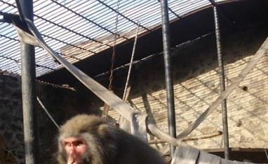 Зоопарк - Обезьяны  - фото 2
