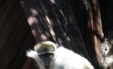 Зоопарк - Обезьяны  - фото 5