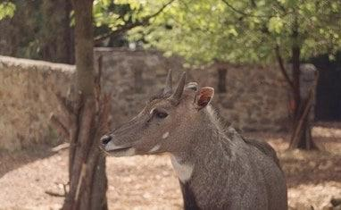 Зоопарк - Копытные  - фото 4