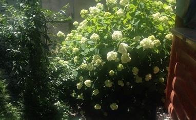 Terrassa - Летний сад - фото 2
