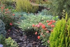 Фото 6 - Летний сад