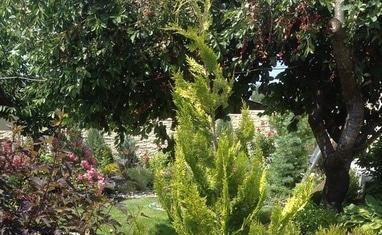Terrassa - Летний сад - фото 3