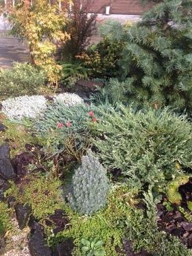 Фото 7 - Летний сад