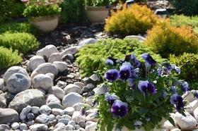Фото 8 - Летний сад