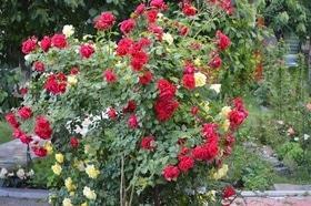 Фото 10 - Летний сад
