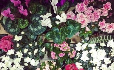 Букет - Комнатные растения - фото 1