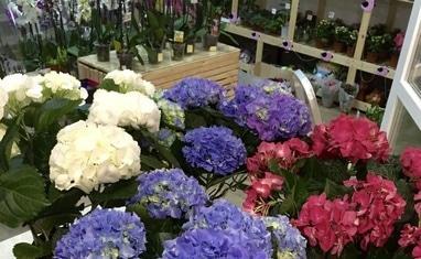 Букет - Комнатные растения - фото 2