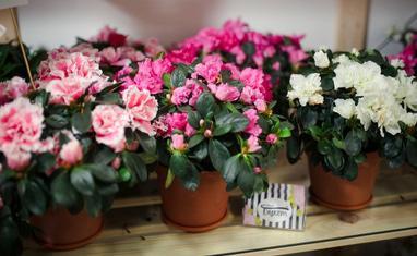 Букет - Комнатные растения - фото 4