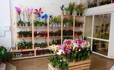 Букет - Комнатные растения - фото 5