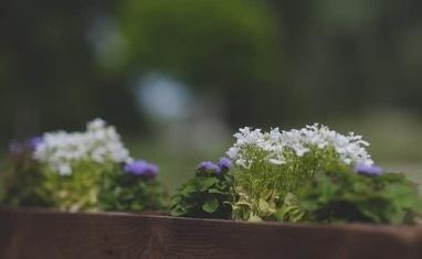 Victoria Garden - Нові деталі інтер'єру - фото 4