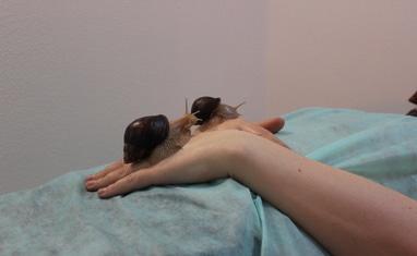 Мир здоровья - Лечебно-косметический массаж улитками - фото 3