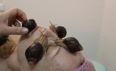 Мир здоровья - Лечебно-косметический массаж улитками - фото 4