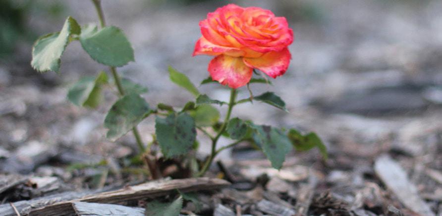 Фото 8 - Планы на выходные: цветущая Долина роз