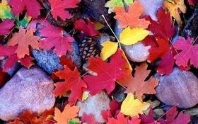 Стаття 'Instagram-осінь в Че'