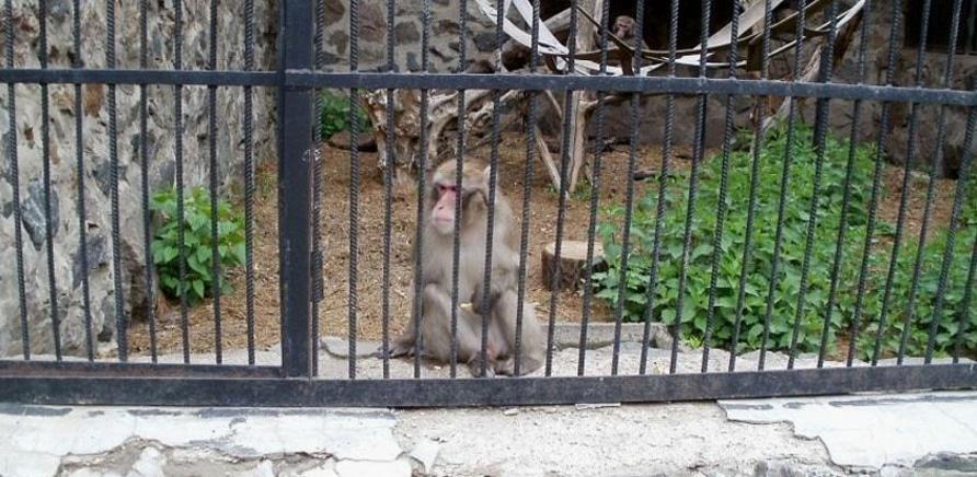 Zoopark otkryvaet sezon s novymi cenami.12