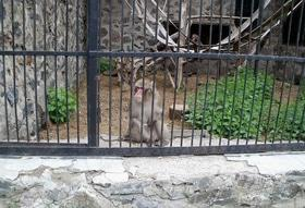 Статья 'Зоопарк открывает сезон с новыми ценами'