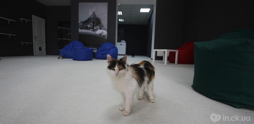 """Фото 3 - Кішку Люсінду господарі залишили на вулиці, коли від'їжджали в інше місто. Її підгодовували сусіди, проте, коли у кішки з'явилися кошенята, від неї вирішили позбавитися. Її встигли вчасно врятувати та віддати у притулок """"Сабалдашино"""""""