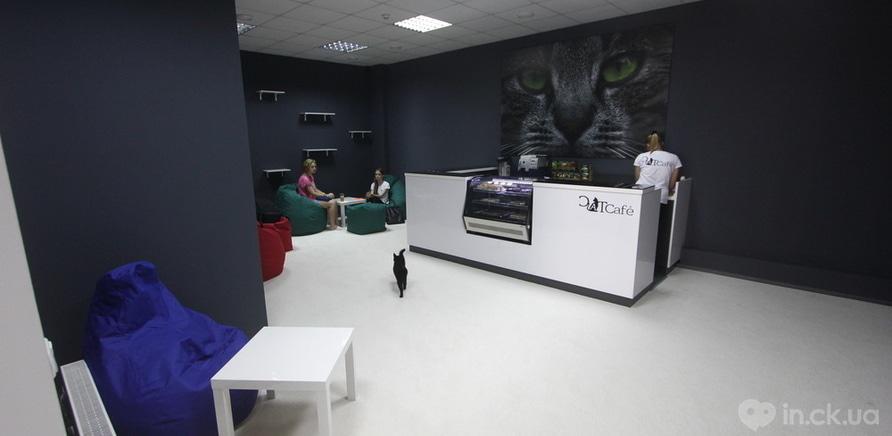 """Фото 7 - В Черкассах открылось """"кошачье кафе"""""""