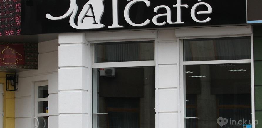 """Фото 8 - В Черкассах открылось """"кошачье кафе"""""""