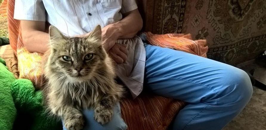 'Я тут працюю: притулок для котів'