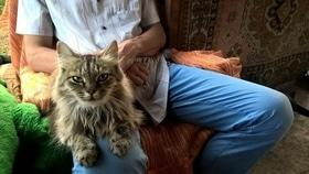 Статья 'Я здесь работаю: приют для кошек'