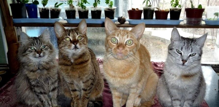 Фото 3 - Я тут працюю: притулок для котів