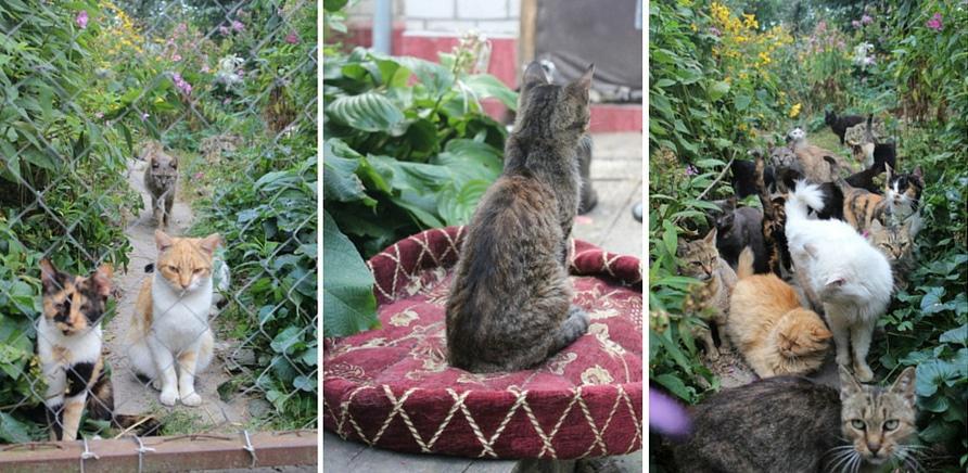 Фото 1 - Я тут працюю: притулок для котів