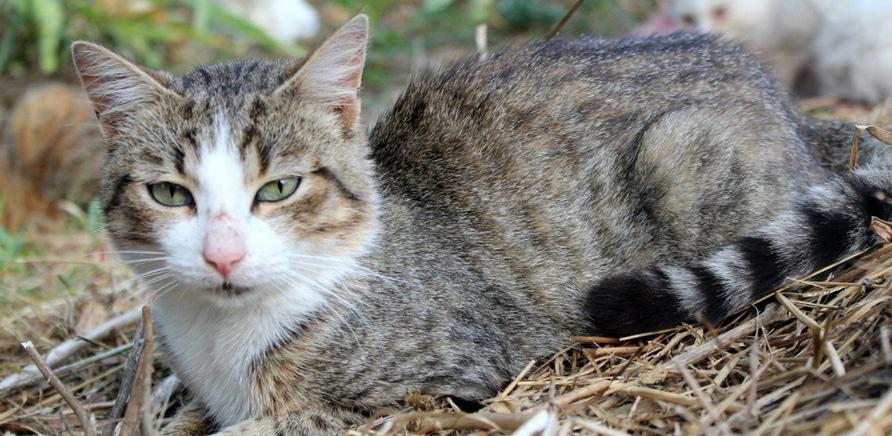 Фото 2 - Я тут працюю: притулок для котів