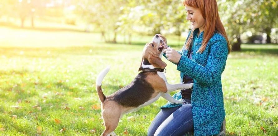 'Полезные контакты для владельцев домашних животных'