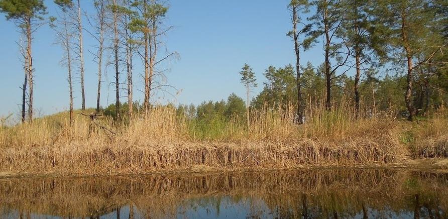 Сагунивка (фото – http://www.panoramio.com/user/7276103)