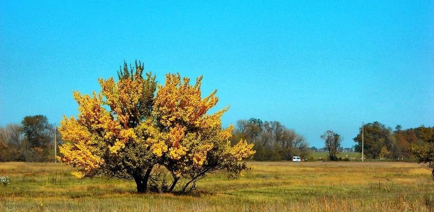 Фото 1 - Села Худоліївка, Чернявка, Медведівка (фото – http://galleryua.com/photo/chigirinskij-rajon)