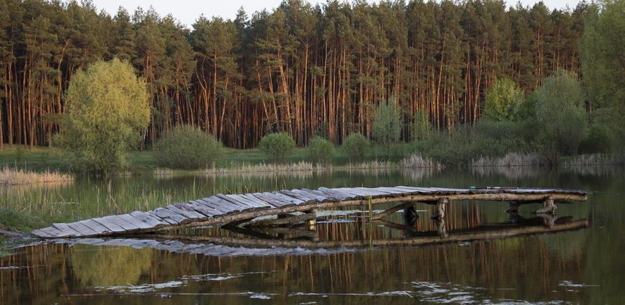 Живописное озеро среди соснового леса (фото – dniprovych.livejournal.com)