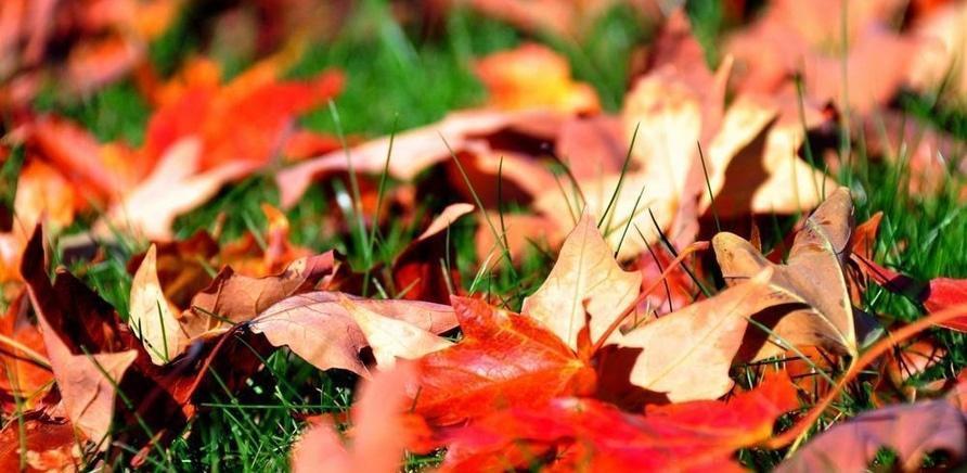 'Запитання дня: що робити, якщо ви стали свідком спалювання листя?'