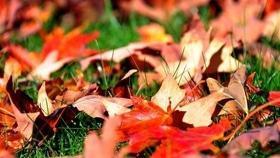 Стаття 'Запитання дня: що робити, якщо ви стали свідком спалювання листя?'