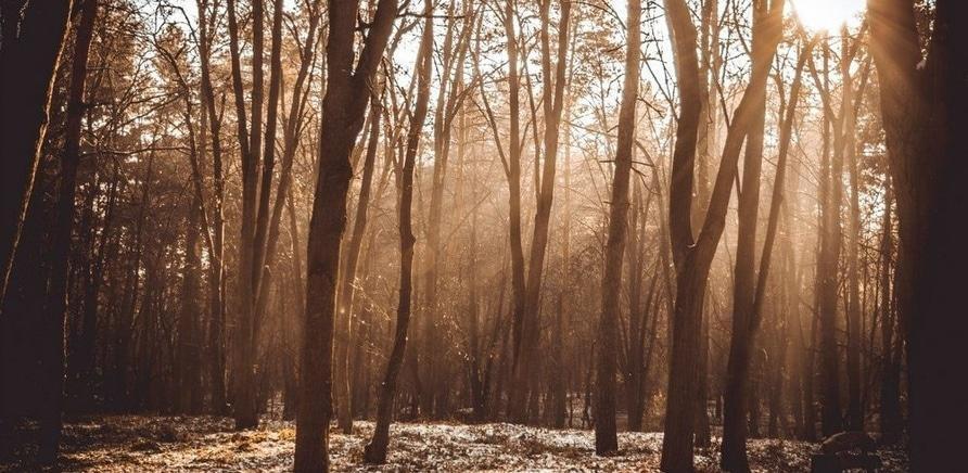 Фото 4 - Фото – Валерій Січкар