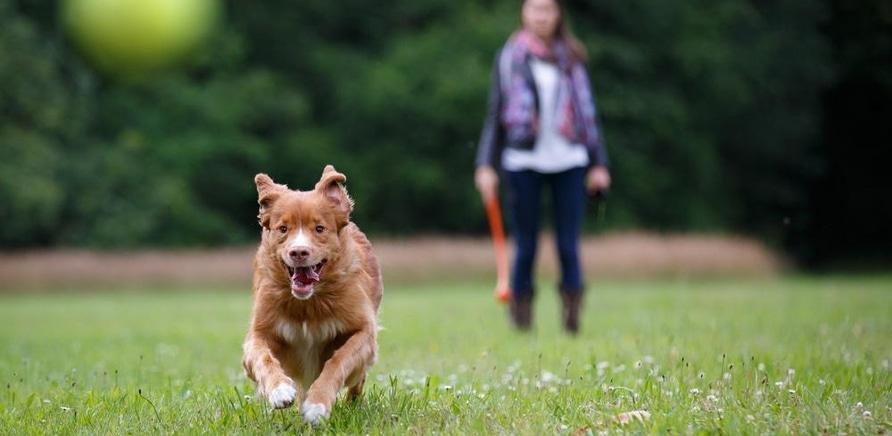 'Мнение ветеринара: как эффективно защитить собаку от блох и клещей весной?'