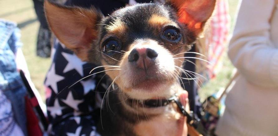 ''BARA-BAKA fest' собрал более 20 тысяч гривен для бездомных животных'