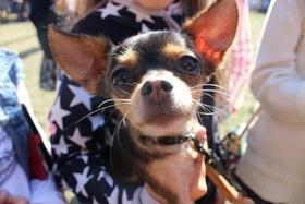 """Статья '""""BARA-BAKA fest"""" собрал более 20 тысяч гривен для бездомных животных'"""