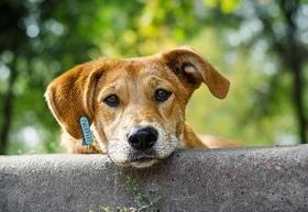 Статья 'Спасать бездомных животных в области помогает Канада'