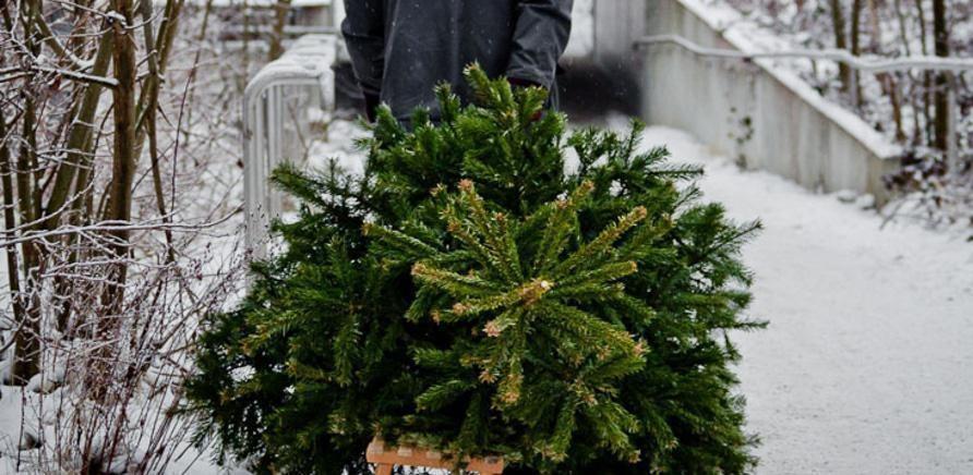 'Сколько будет стоить новогодняя елка в Черкассах и области?'