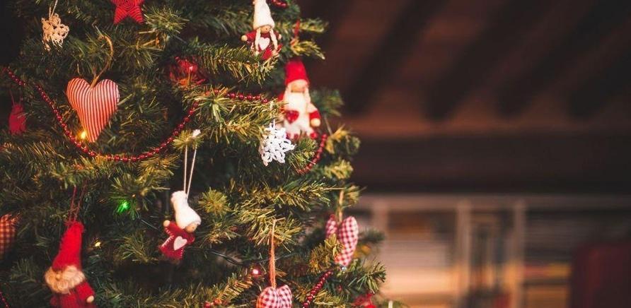 'Живая, искусственная или в контейнере: какую елку выбрать на Новый год?'