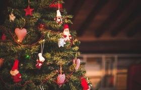 Стаття 'Жива, штучна чи в горщику: яку ялинку обрати на Новий рік?'