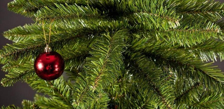 Жива, штучна чи в горщику: яку ялинку краще обрати на Новий рік?