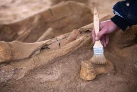 Статья 'Зубы ископаемых акул можно найти на черкасских пляжах'