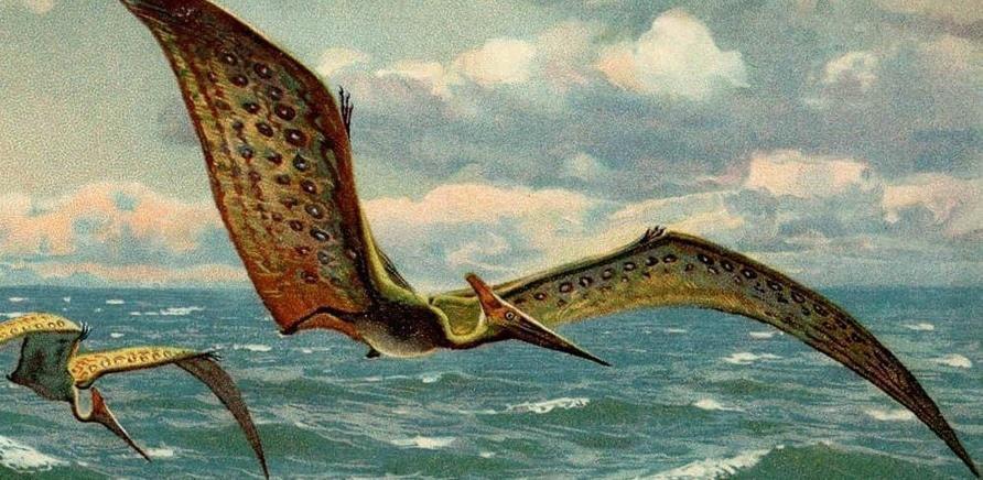 'Какой была Черкасщина во времена динозавров и мамонтов?'