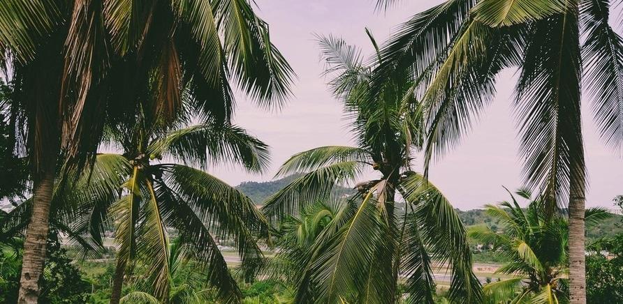 Фото 1 - Джунглі